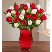 $19.99 off 30 Holiday Tulips
