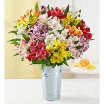 $27 off Assorted Peruvian Lilies: 100 Blooms + Free Vase